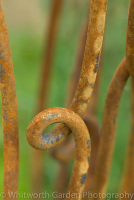 Rusty metal garden support. © Jo Whitworth