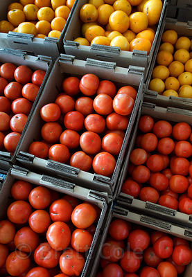 Locally grown tomatos for sale at a wholesale market in Amish country, Lancaster, Pennsylvania