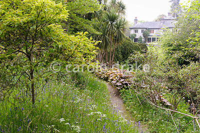 Grass in parts of the garden grows long and contains wildflowers such as bluebells and cow parsley. There are many naturalize...