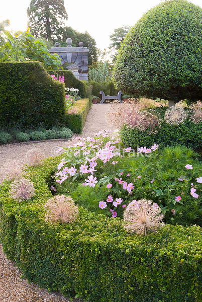 Clipped box and yew hedges feature in the Organic Kitchen and Flower Garden, here decorated with seedheads of Allium cristoph...