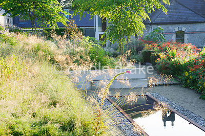 The golden awns of Stipa gigantea catch the early morning sun as they lean over the reflecting pool, with hot border beyond p...