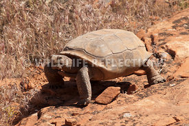 tortoise_on_the_prowl