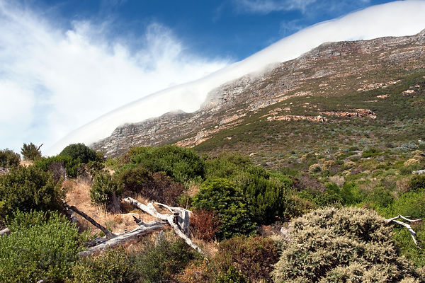 Hills near Simon's Town, Cape Peninsula, South Africa. This is the habitat for the Smitswinkel troop of chacma baboons