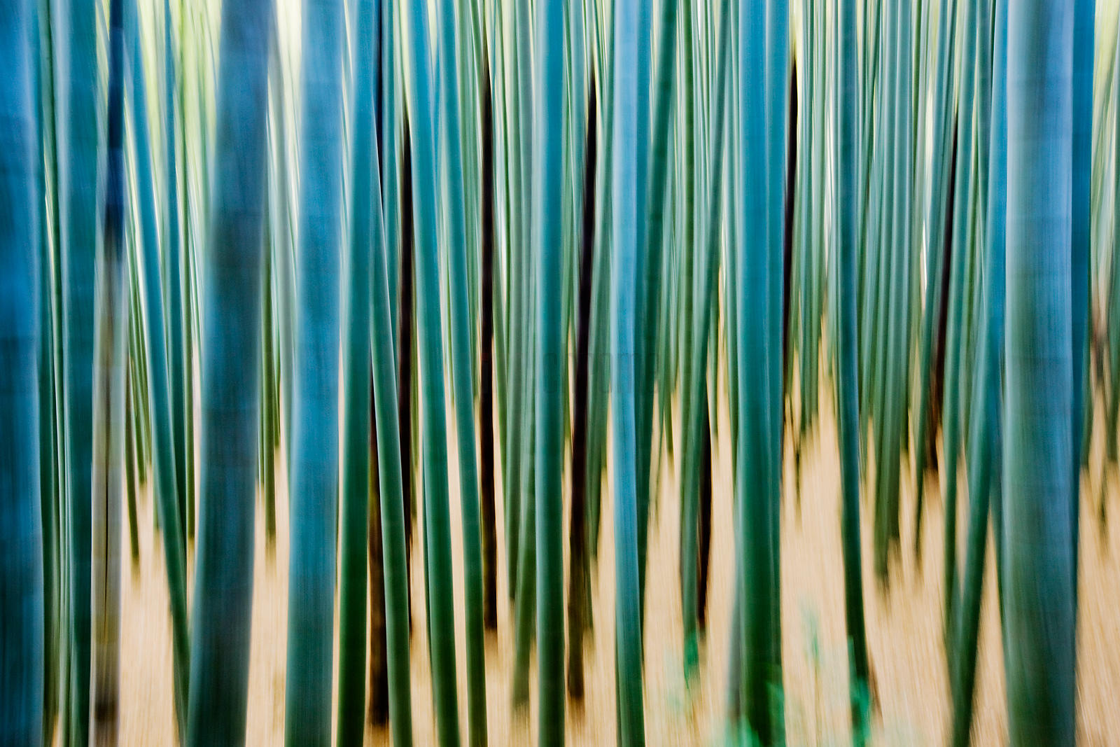 Vertical Motion Blur in Bamboo Forest