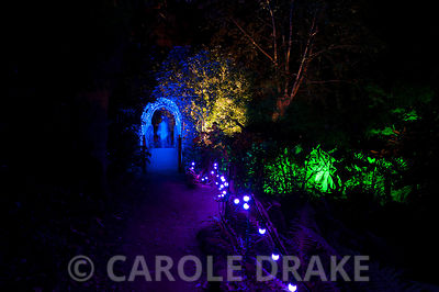 Illuminated path leads towards a bridge covered with a net of blue lights at Abbotsbury Subtropical Gardens in October