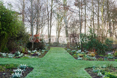 Clumps of snowdrops illuminate borders divided by wide grass paths at Higher Cherubeer, Devon