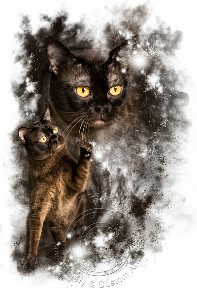 Art-Digital-Alain-Thimmesch-Chat-7