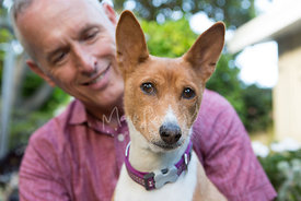 Brown and white basenji dog sitting in front of man