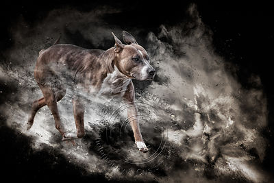 Art-Digital-Alain-Thimmesch-Chien-84