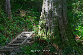 Stairway along Trail to Lake Twentytwo in Cascade Mountains