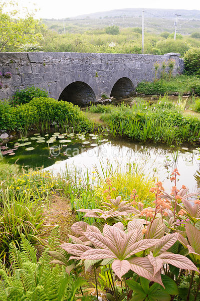 Pond with bridge and Burren landscape behind, fringed with moisture loving plants including Rodgersia pinnata, lysichtion, Ca...