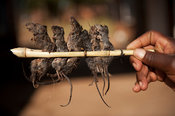 Mice on a stick, a local delicasy, Dedza, Malawi