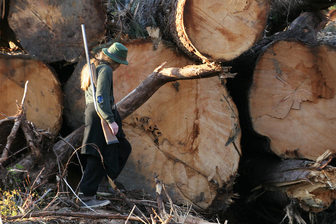 A forest activist stands next to a logpile with old-growth trees cut in the Chugach National Forest, Alaska