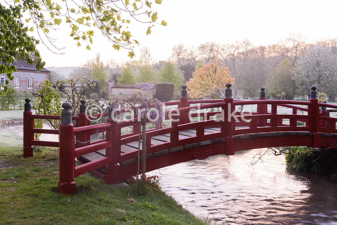 Nikko bridge framed by wisterias spans a tributary of the River Avon in the Japanese garden at Heale House, Middle Woodford, ...