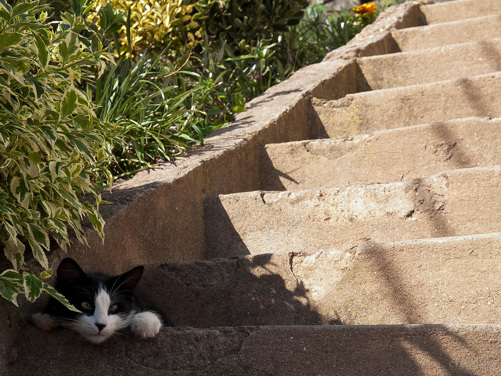 sunny steps with a cat