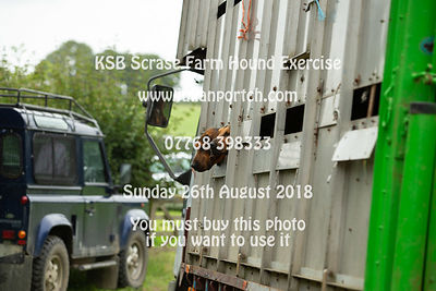 2018-08-26 KSB Scrase Farm Hound Exercise