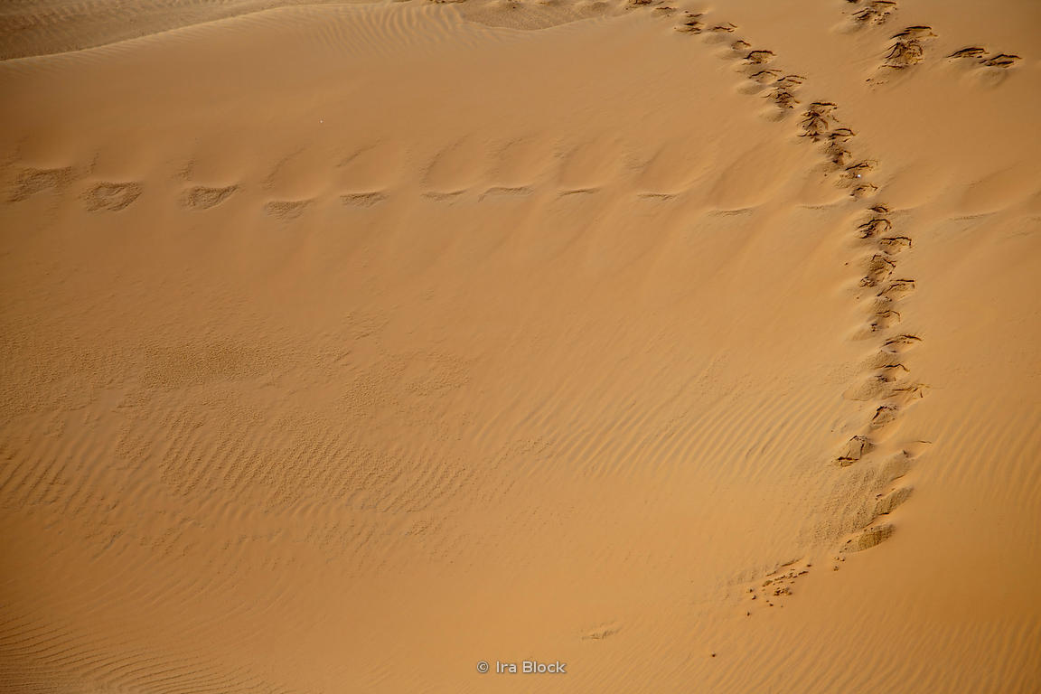 Footprints on Empty Quarter desert.