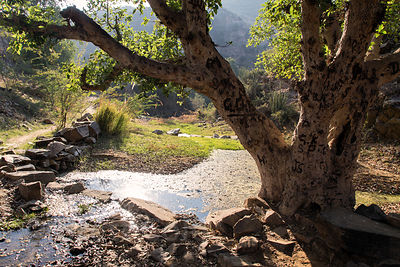 Creek and trees in the beautiful natural area surrounding Bedhnath temple, Rajasthan, India