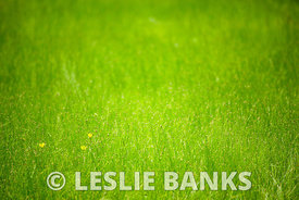 Grassy Meadow Background