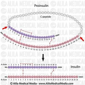 Insulin and proinsulin