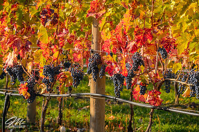 okanagan_fruits-136