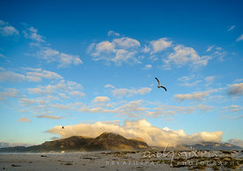 Seagulls flying over the beach in front of Muizenberg Peak, covered in cloud