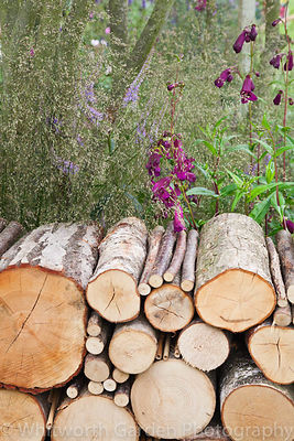 The Wild in the City garden designed by Charlotte Murrell at the RHS Hampton Court Flower Show 2011. © Rob Whitworth
