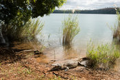 Nile crocodile at the sacred lake, Lake Antanavo, Madagascar