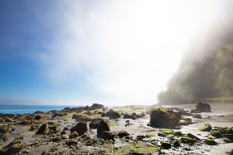 NEAH BAY BEACH FOGGY MORNING PACIFIC NORTHWEST OLYMPIC PENINSULA WASHINGTON