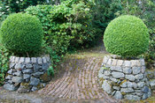 Built stone containers with clipped box frame brick path into Tiara garden. Caervallack Farm, St Martin, Helston, Cornwall, UK