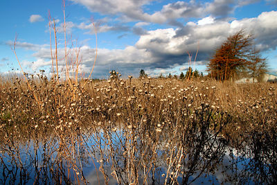 Wetlands and grasses under baby blue skies in the Willamette Valley, Oregon