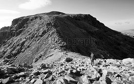 A hiker descending Broad Crag before heading up Scafell Pike in the English Lake District. UK. Black and white styling and fi...