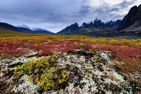 Fall Colors | Tombstone Territorial Park, Yukon