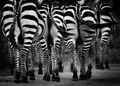 04944-Zebras_on_the_road_Kenya_2018_Laurent_Baheux