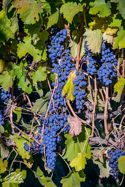 okanagan_fruits-140