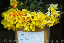 Vestiges of the Daffodil industry in the Tamar Valley, Cornwall - bunches from the original fields for sale by the roadside. ...