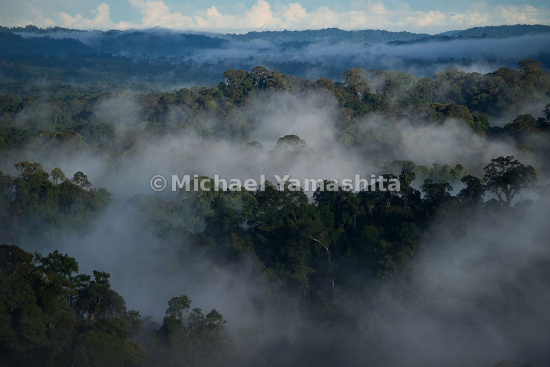 Enroute to Ulu Temburong National Park and Park pics including jungle sunrise from scaffolding canopy walk and Iban village d...