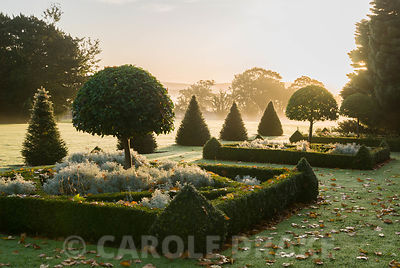 Box parterre contains clipped umbrella laurels and santolina with yew pyramids framing lawn leading into surrounding countryside across ha-ha. Private garden, Pulham, Dorset, UK