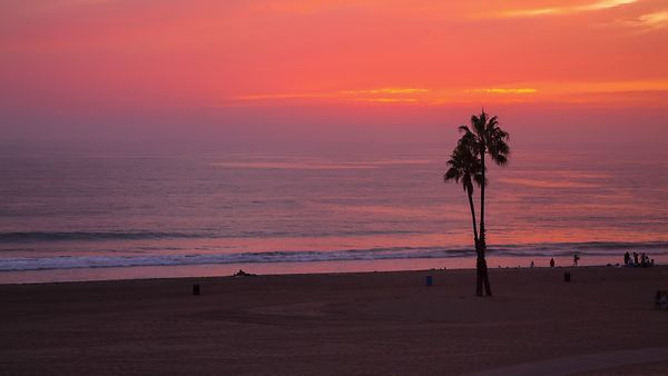 Close Up: Regal Purple & Orange Sunset Over A Lonely Palm Tree On The Beach