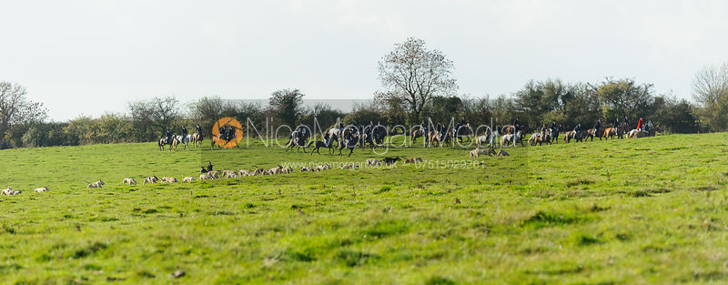 Cottesmore hounds at work - The Cottesmore Hunt at Braunston, 12-11-13.