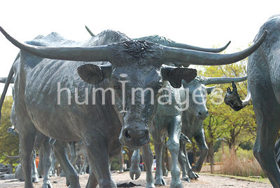 Dallas Stock Photos: Pioneer Plaza longhorn sculpture  in downtown Dallas [WOP]