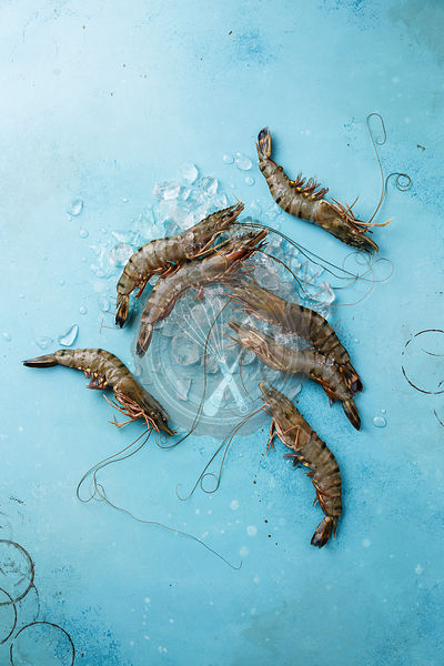 Raw fresh Tiger Prawn Shrimp on ice on blue background