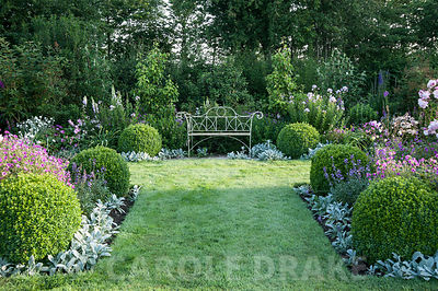 White metal bench in the formal garden to the east of the house framed with clipped box balls, Stachys byzantina 'Silver Carpet', Erysimum 'Bowle's Mauve', Geranium Patricia = 'Brempat', campanulas and roses. Westbrook House, West Bradley, Somerset, UK