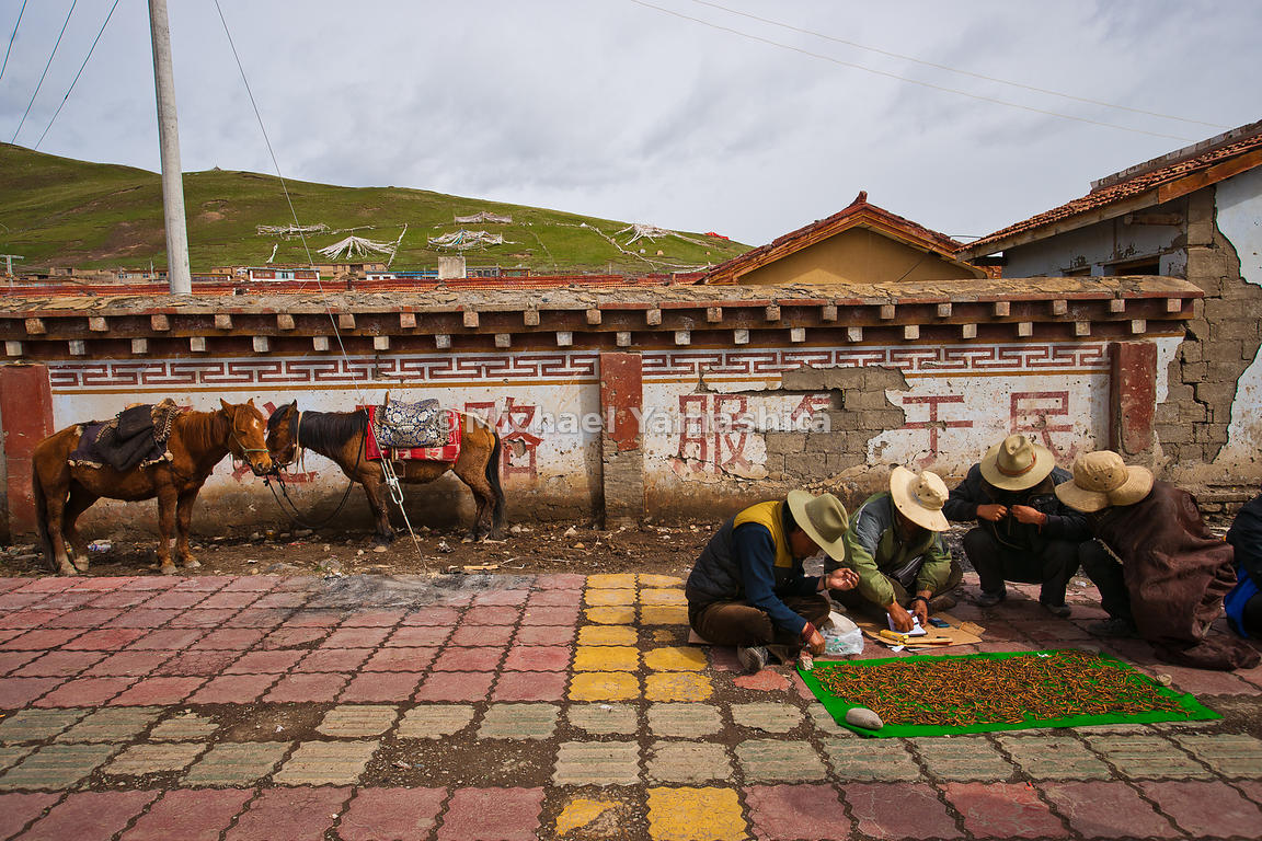 Nomads gather in Serxu, the world's highest town at 13,600 ft (4,150 m) to clean and display their wares, their trusty Tibeta...