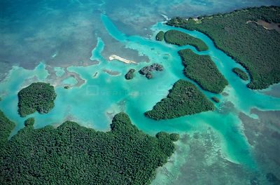Aerial view of Red mangrove (Rhizophora mangle) coastal lagoon, Sian Ka'an Biosphere Reserve, Caribbean Sea, Mexico, January