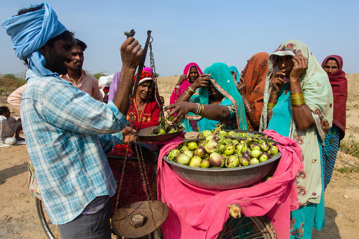 Ladies in saris buy eggplants from a mobile (bicycle) vegetable seller while taking a lunchbreak from a goverment subsidized ...