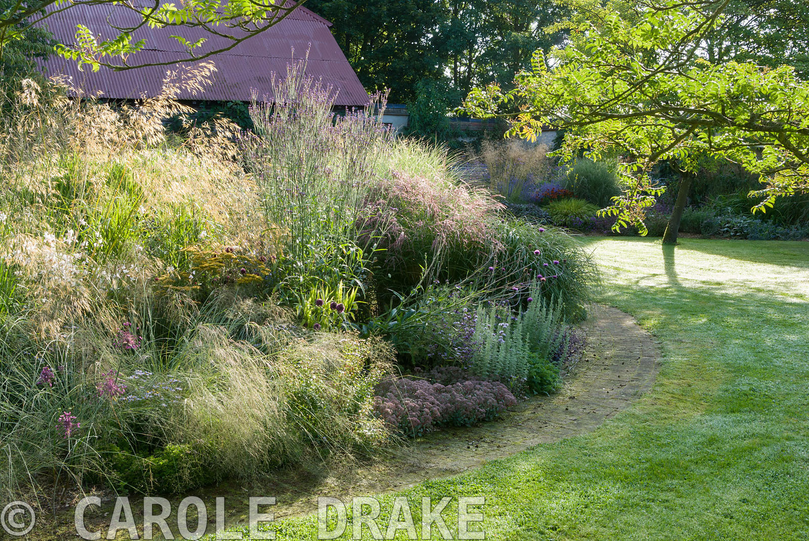 Central circular bed is a mass of graceful grasses and herbaceous perennials including Miscanthus 'Morning Light', Stipa giga...