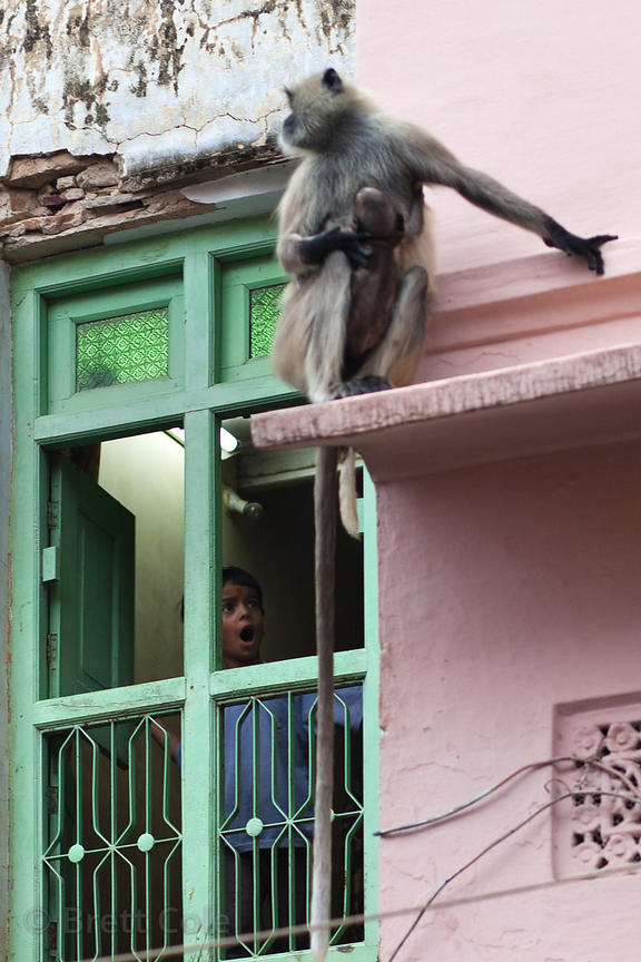 A boy makes monkey faces at a Langur monkey in Pushkar, Rajasthan, India