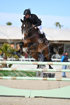 Oliva, Spain - 2018 January 27: Bronze tour 1m30 during CSI Mediterranean Equestrian Tour 1..(photo: 1clicphoto.com I Nicole ...