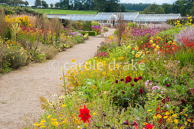 Double herbaceous borders planted with predominantly hot colours leading toward restored Victorian glasshouses. Plants includ...